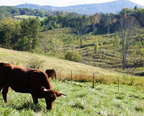 Farmland Program - Southern Appalachian Highlands Conservancy