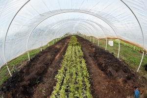 High tunnel on community farm