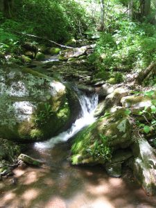 Clean water resources in the Marshall Watershed