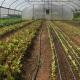 Greenhouse on Community Farm