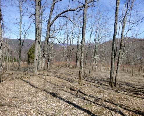Big Cove Creek forest view