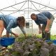 Headwaters Market Garden harvesting greens