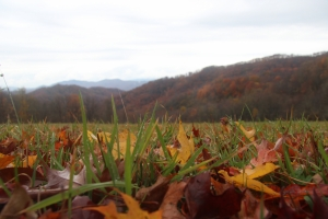Close-up of fall leaves on the meadow on the Hump Mountain conservation property.