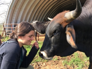 Nature Experience Director Lauren meeting Brahman-longhorn bull