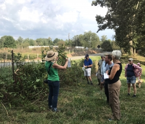 group discussing invasive plants on fence line