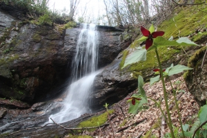 Waterfall and trillium
