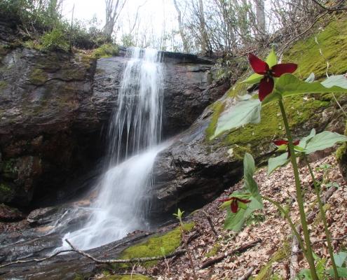 Waterfall and trillium