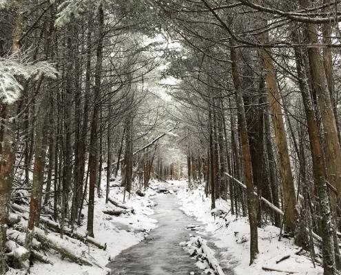 Winter trail in woods