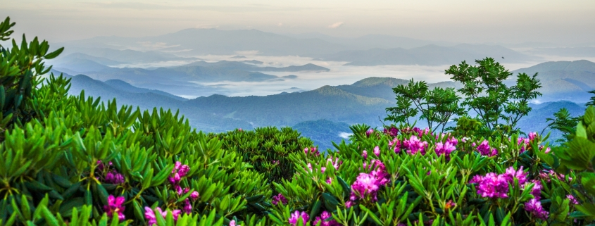 View of mountains and rhododendron