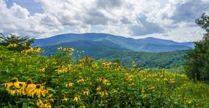 Roan Scenic mountain and flower view