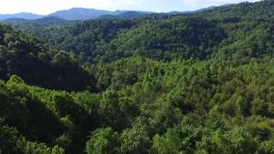 Chestnut Mountain