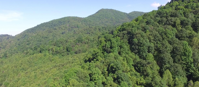 Chestnut Mountain view