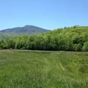 View of Celo Knob from Bowditch Bottoms