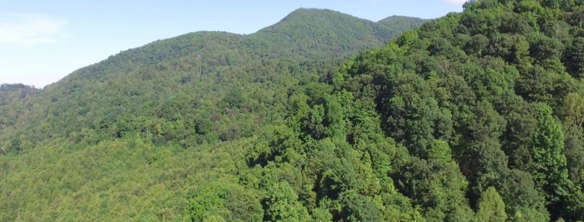 Photo of Chestnut Mountain by Adams Wood