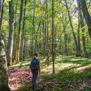 View of hiker walking in woods at Tiger Creek