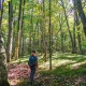View of hiker walking in woods at Tiger Creek