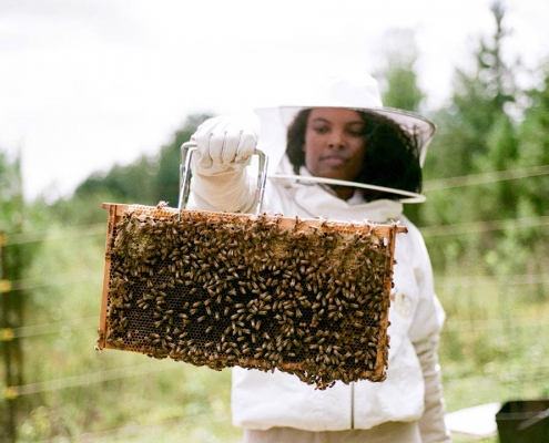 Tamarya with frame filled with bees