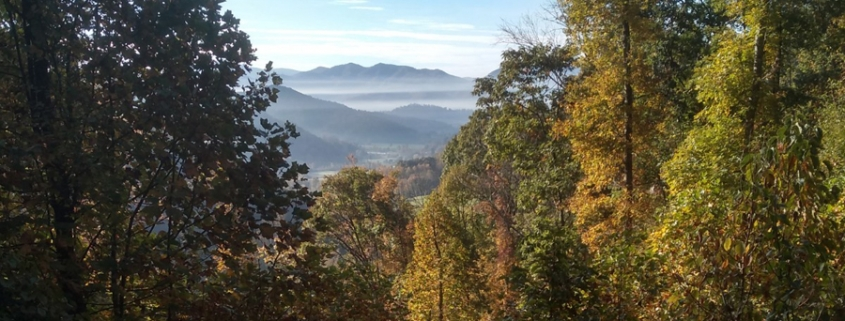 View from Beaverdam tract, with trees in foreground and distant mountains in background. Photo creditWildwood Consulting LLC Dan Callaghan