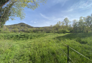 Open fields and forest at Hickory Nut Gap