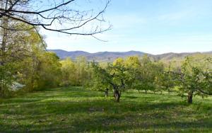 View of Orchard and Distant Mountains from HIckory Nut Gap Forest tract
