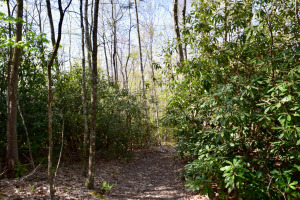 Hickory Nut Gap Forest