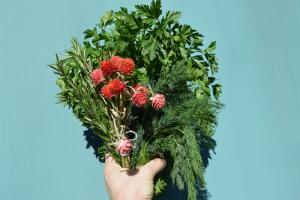 fresh herb bunch