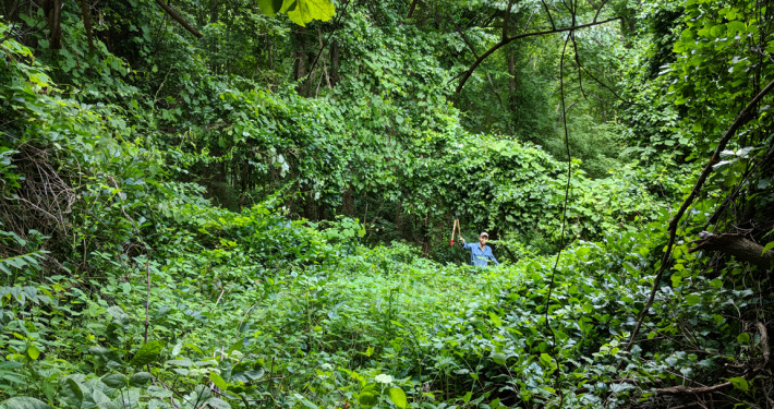 Sandy Mush property being treated for invasive plant species