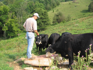 Mark Rogers with Black Angus cattle on farm