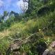low elevation basic glade habitat photo