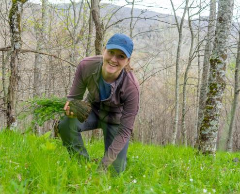volunteer planting red spruce