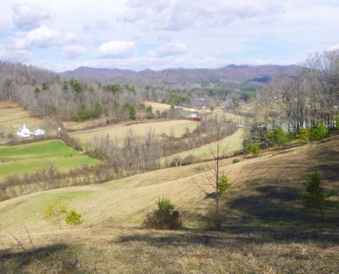 View of pasture, forest edge, Sandy Mush community